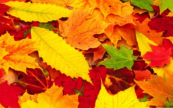 Red-Autumn-Leaves-Photography-HD-Wallpapers-for-Beckground-5